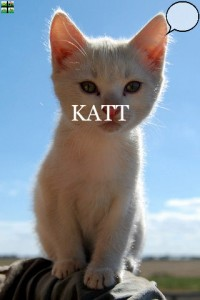 pekbok katt